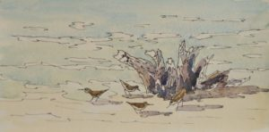 watercolor painting of sandpipers and driftwood by Gail Cleveland